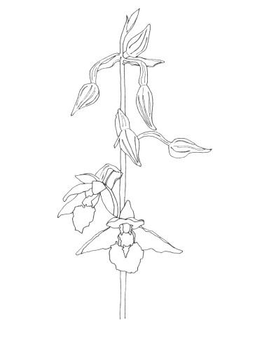july | marsh orchid